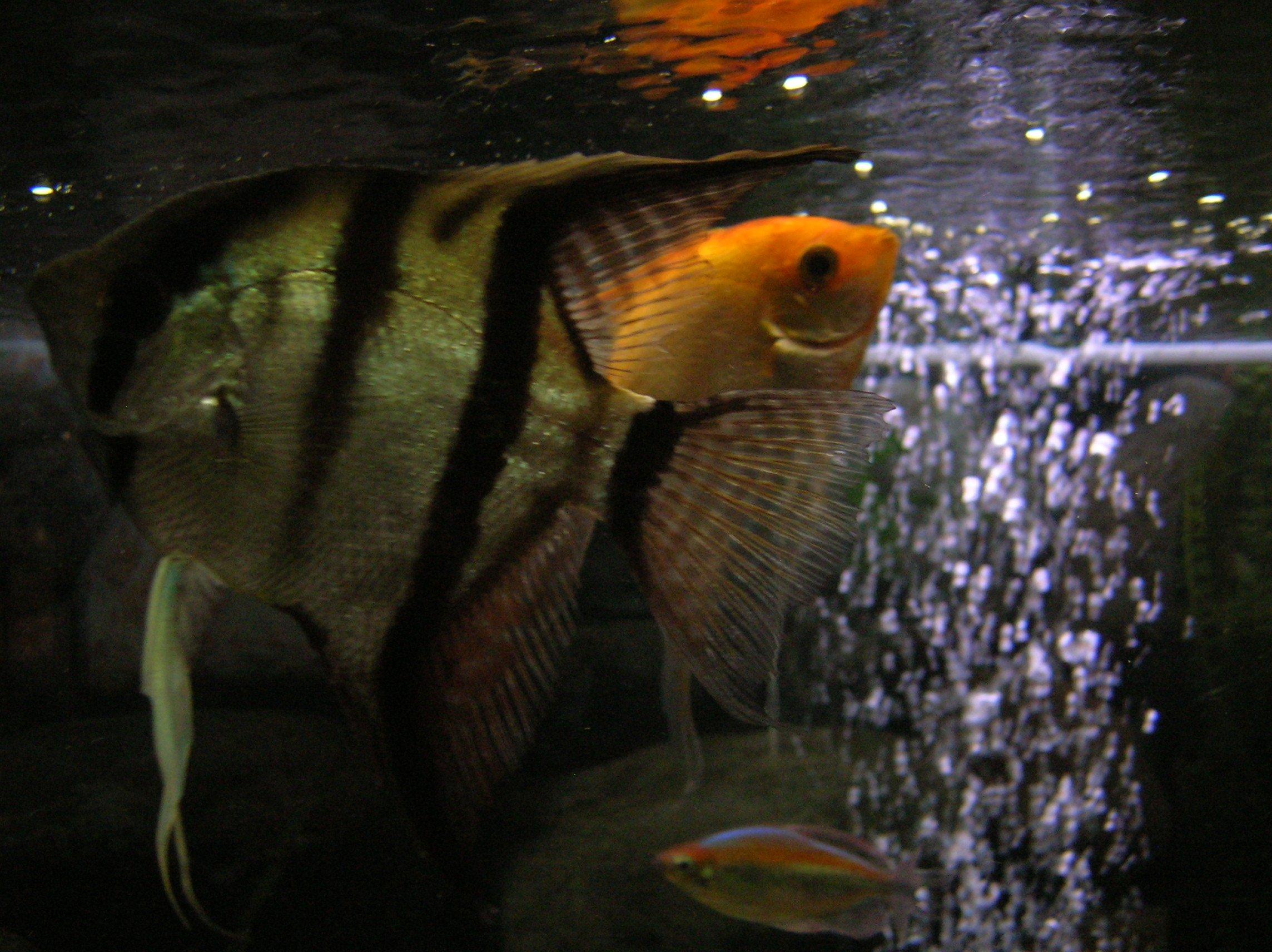 Aquariums poissons et tortues d eau douce for Poisson tropicaux eau douce